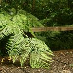 Fern growing over a bench. It made for a very peaceful and tranquil scene.